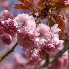 Cherry Blossom: Wie die CIA WLAN-Router hackt