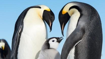 Die Linux-Werkzeuge von Systemd bekommen weiter Zuwachs.