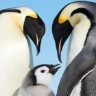 Linux: Systemd bekommt Werkzeuge zum Bauen und Verteilen von Images