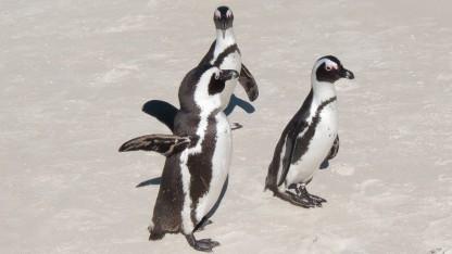 Die Linux-Werkzeuge von Systemd stehen in Version 234 bereit.
