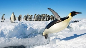 Die IPC unter Linux hat weiter Potenzial für Optimierungen.