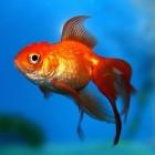 Adware: Lenovo zahlt Millionenstrafe wegen Superfish