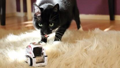 Katze gegen Roboter