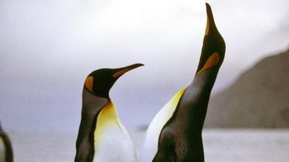 Linux 4.14 geht in die Testphase.