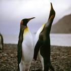 Betriebssysteme: Linux 4.14 verwaltet jetzt 128 Petabyte RAM