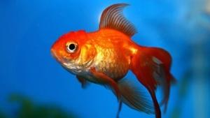 Lenovo sieht die Beschwerden über Superfish immer noch nicht vollständig ein.