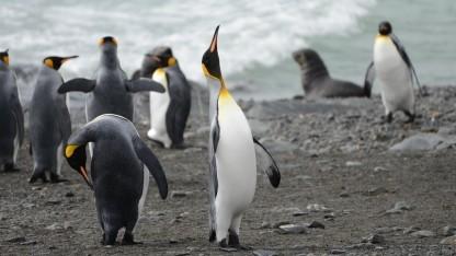Linux-Nutzer sollten Kernel-Updates immer einspielen.