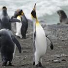 Fuzzing: Google zerlegt USB-Stack des Linux-Kernels