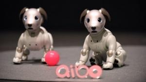 Sonys Roboterhund Aibo: dreijähriges Abonnement für Cloud-Dienste