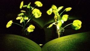 Leuchtende Pflanze: neue Funktionen durch Nanotechnologie