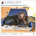 Facebook: Wieder mehr Haustierbilder statt Hass