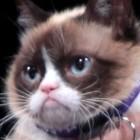 Markenrecht: Grumpy Cat erhält 710.000 US-Dollar Schadenersatz
