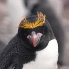 Betriebssysteme: Linux 4.16 bringt Spectre- und Meltdown-Patches und mehr