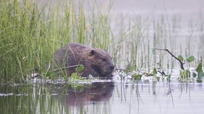 Ubuntu 18.04 heißt Bionic Beaver.