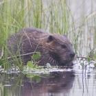 Bionic Beaver: Canonical will Telemetrie in Ubuntu sammeln