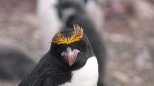 Linux 4.16 wappnet sich weiter gegen Spectre und Meltdown.