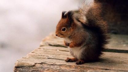 In der Webmail-Software Squirrelmail wurde eine Sicherheitslücke gefunden.