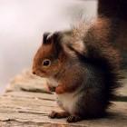 Webmailer: Squirrelmail-Sicherheitslücke bleibt vorerst offen