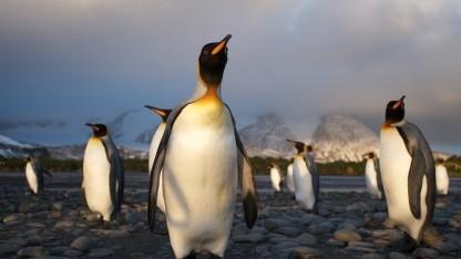 Die Lizenz von Linux sollte eigentlich genauso bekannt sein wie dessen Maskottchen: der Pinguin.