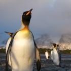 Linux: Mit Ignoranz gegen die GPL