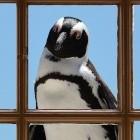 Microsoft: Windows Server 2019 bringt Kubernetes und mehr Linux