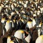 Urheberrecht: Mehrere Firmen unterstützen GPL-Erweiterung für Linux