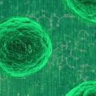Neuronale Netze: KI-System vermehrt sich selbst, um effizienter zu werden