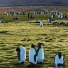 Linux: Hardware soll Schlüssel der Kernel-Entwickler schützen