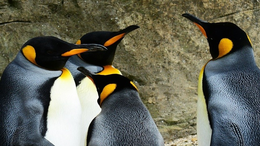 Linux 4.17 bringt weitere Optimierungen für den Grafikkartentreiber AMDGPU.