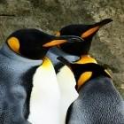 Betriebssysteme: Linux 4.17 entfernt alten Code und bringt viel Neues