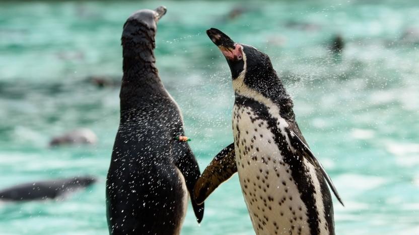 Im Windows Subsystem for Linux wird der Austausch per Copy-and-paste möglich.