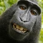 Urteil angekündigt: Gericht lehnt Vergleich um Affen-Selfie ab