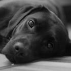Lycos: Der Labrador liefert E-Mails nur noch gegen Geld aus