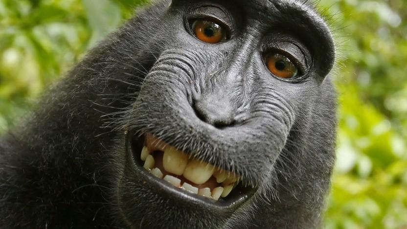 Affe Naruto hat kein Recht am eigenen Selfie