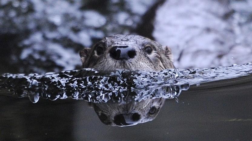Ubuntu 18.04 heißt Bionic Beaver, bionischer Biber