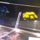 LG Display: Flexibles OLED-Display zum Durchgucken