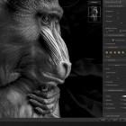 Bildbearbeitung: DxO macht Nik Collection 2018 kostenpflichtig