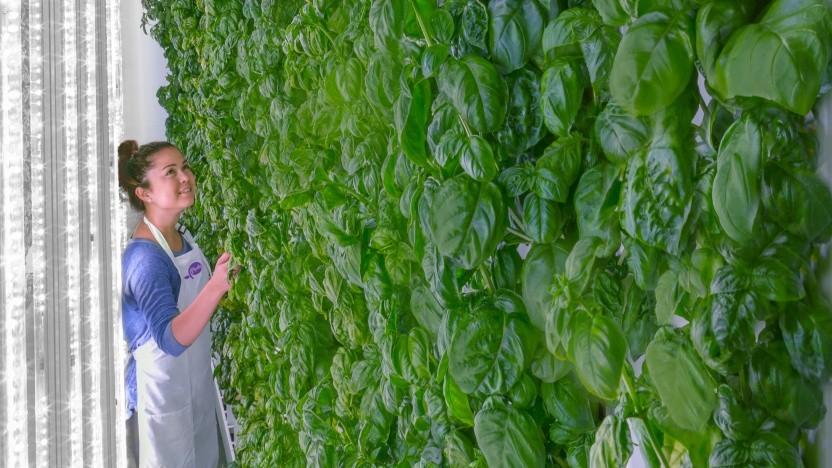 Plenty baut Gemüse vertikal an und lässt es in Lagerhäusern wachsen.