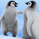 Live-Linux: Knoppix 8.3 mit Docker