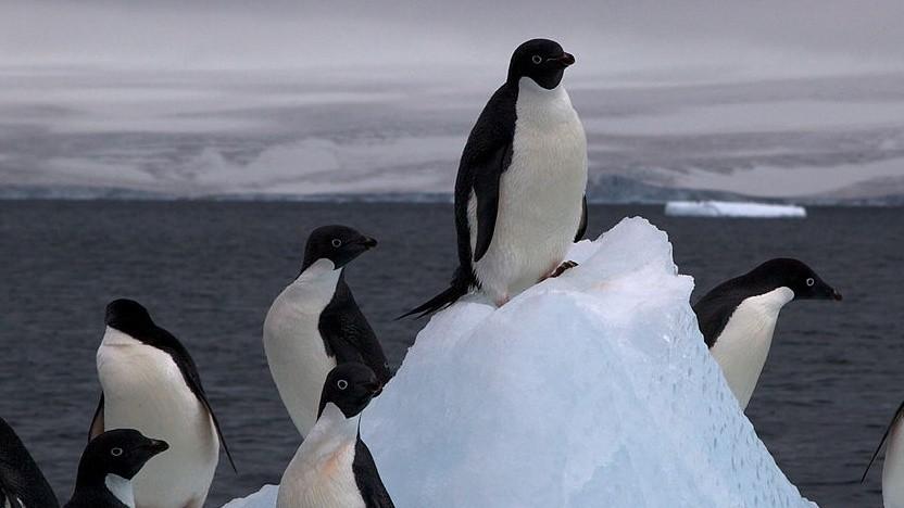 Mit der Veröffentlichung von Linux 4.18rc1 ist die übliche sechswöchige Testphase eingeläutet worden.