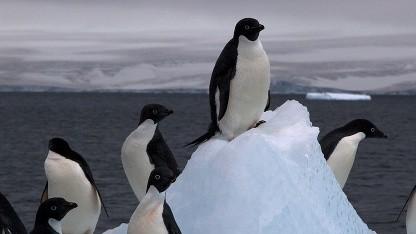 Linux 4.18 schafft die Grundlage für eine neue Firewall.