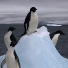 Betriebssysteme: Linux 4.18 bahnt den Weg für eine neue Firewall