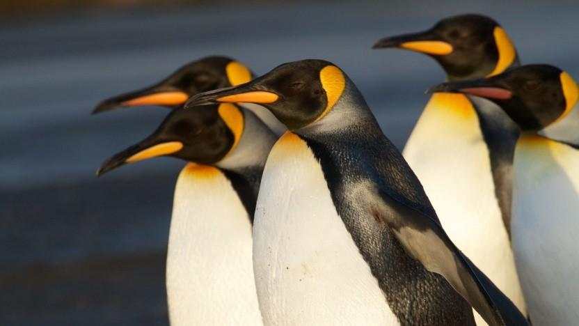 Die Verwendung der GPLv2-Erweiterung ist von der Linux-Community gestartet worden.