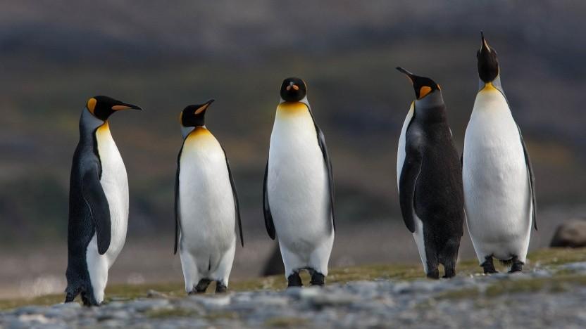 Der Networkmanager 1.12 bringt Linux-Nutzern neue Funktionen.