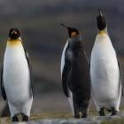 Linux: Networkmanager 1.12 bringt FILS und Wake on WLAN