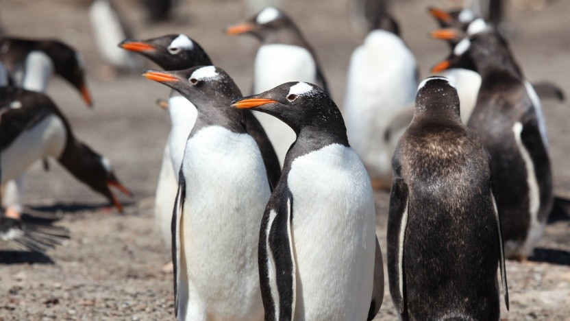 Linux-Screensharing für Wayland soll WebRTC nutzen.
