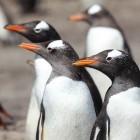 Linux: Screensharing für Wayland kommt per WebRTC