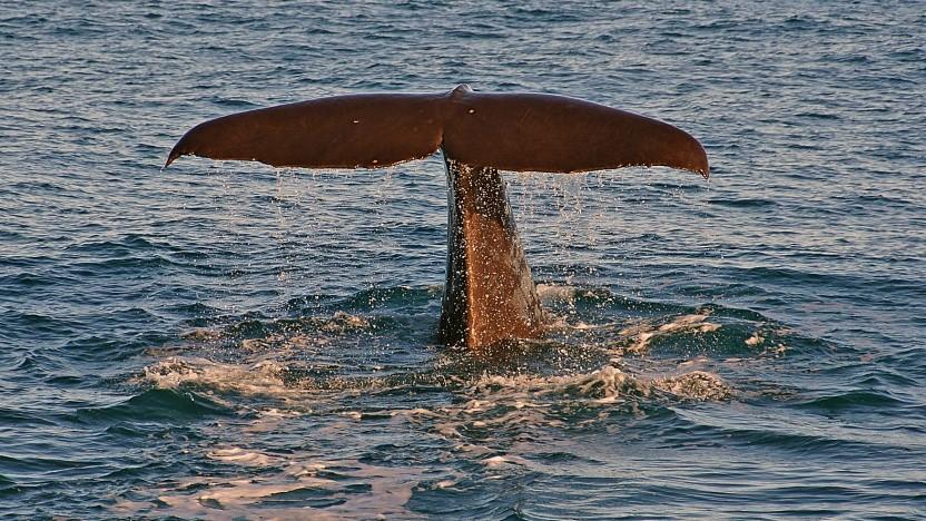 Der Wal ist das Maskottchen von Docker.