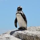 Linux-Kernel: Google baut Mini-Treiber-Schicht für unbekannten Apex-Chip