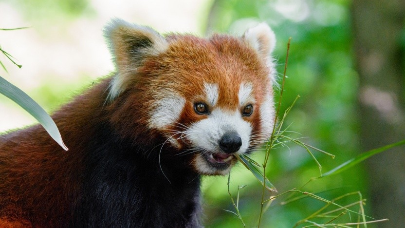 Das Team hinter dem Firefox-Browser nutzt künftig wohl Clang statt MSVC.